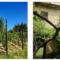 Dai sentieri biogliesi si avvista l'oasi di frazione Becca: case di campagna per vacanze fra bosco e vigneti!